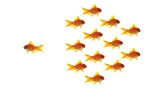 Different fish