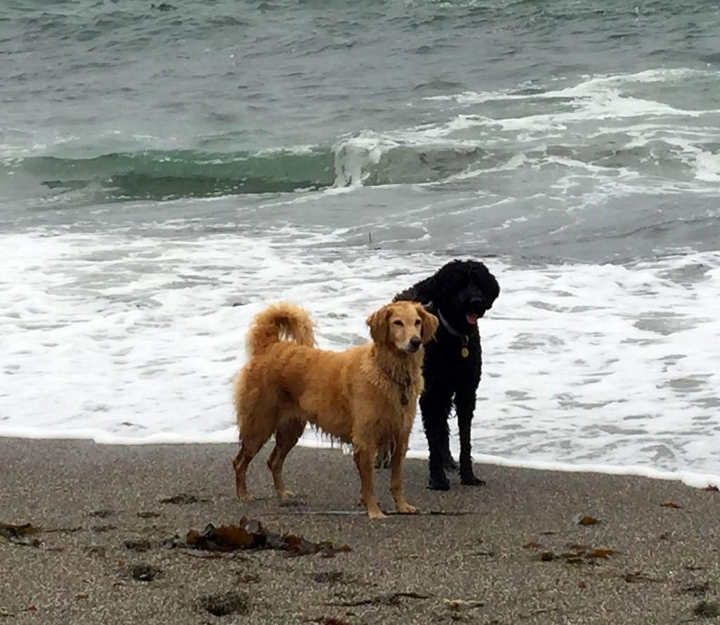 dog-beach-iii