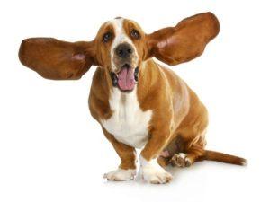 all ears listening